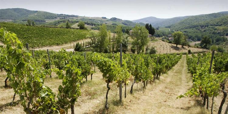 winery_slide31
